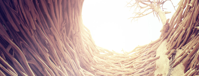 nora, braided tree roots and sun light